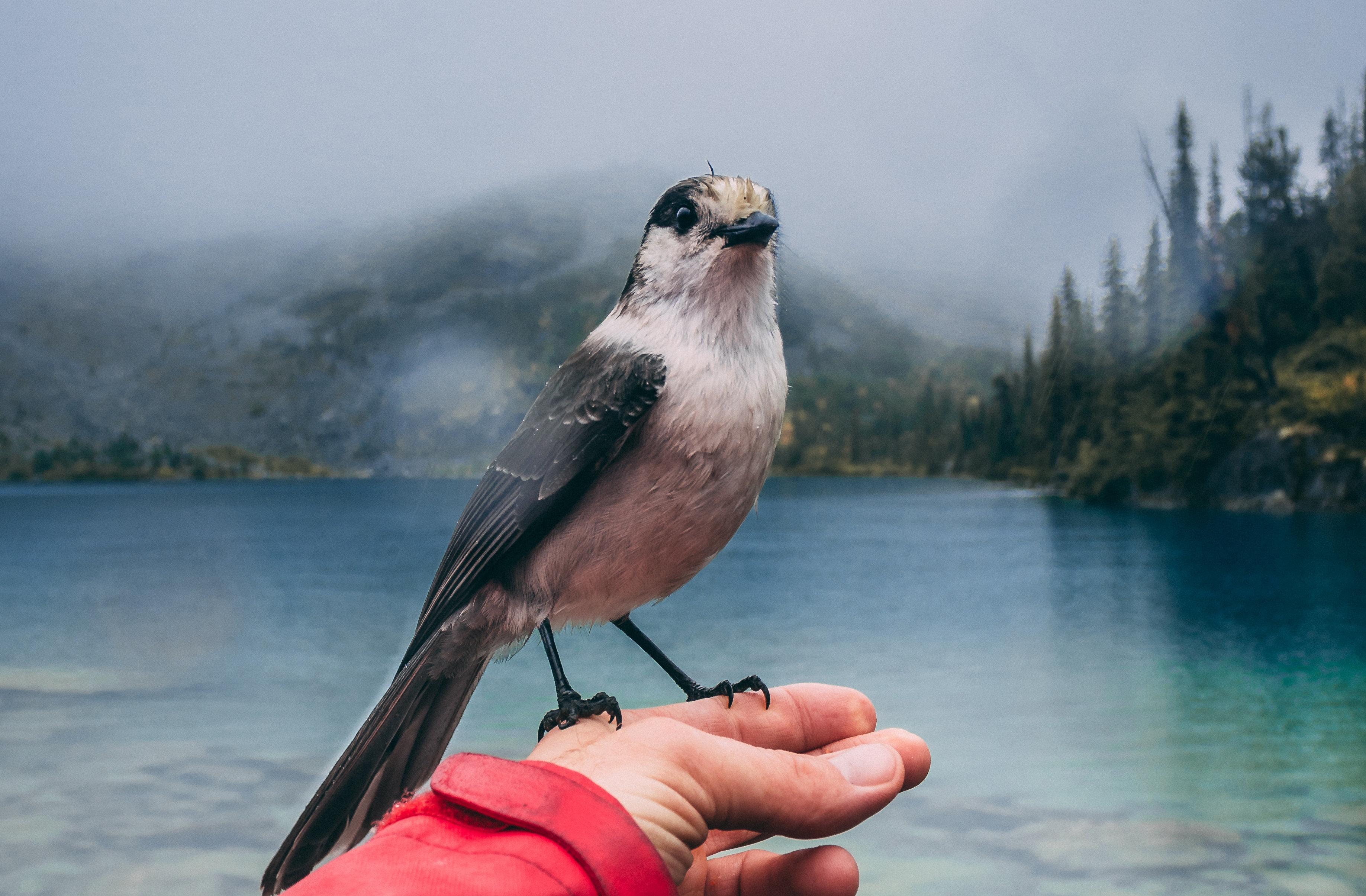 фото птицы и человек картинки распоряжении экипажа